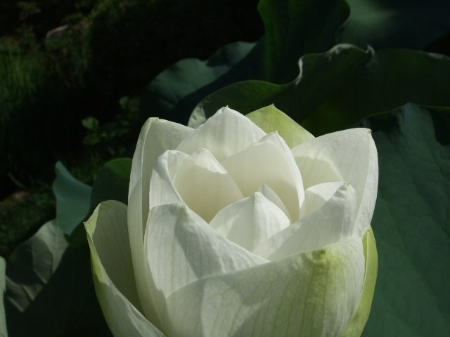 2010_07250010